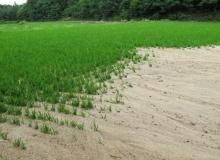 [영주]장마시작에 따른 농작물 관리 철저 당부
