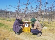 [영주]비벡터링(Bee-Vectering)을 활용해 과수화상병, 과심곰팡이병 방제
