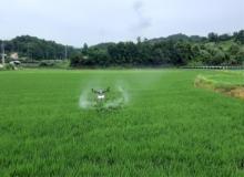 [영주]드론을 활용한 농작물 병해충 무인항공방제에 나서